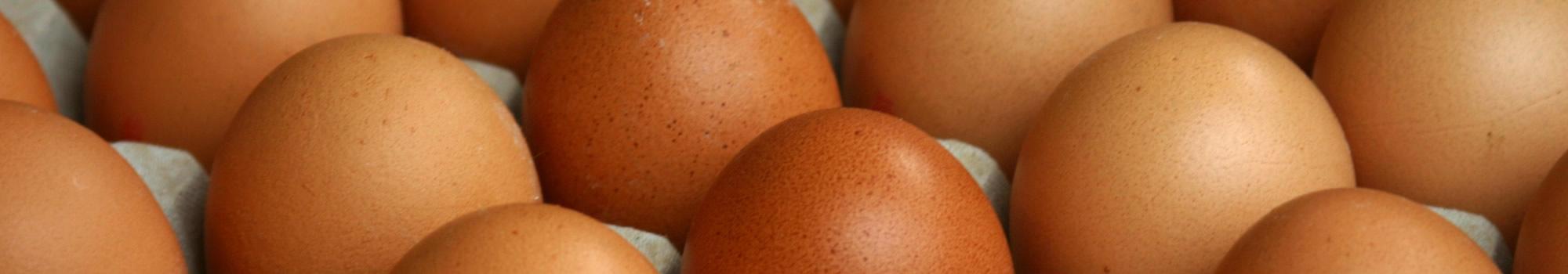 eggs-slide